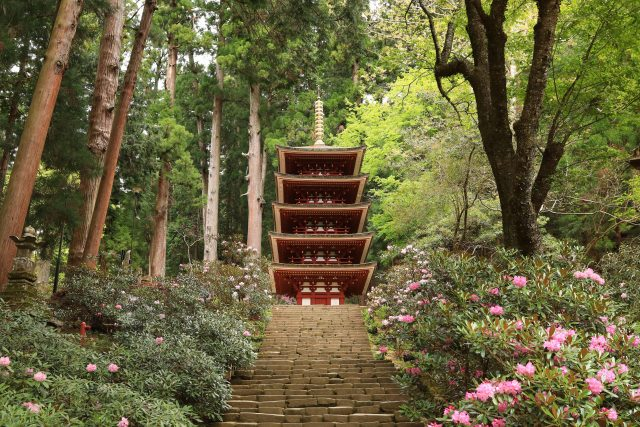 石楠花が咲く室生寺