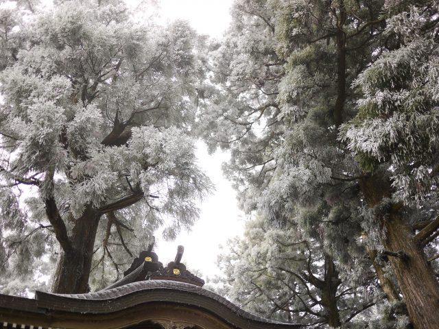 霧氷でおおわれた荒神社