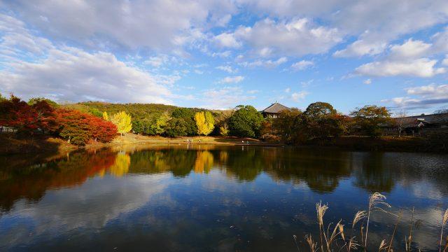 秋の大仏池