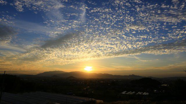 秋空高く黄金色に輝く雲