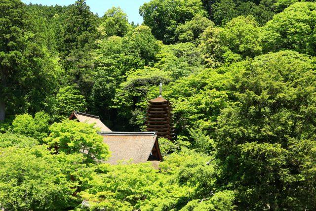 青紅葉につつまれた談山神社